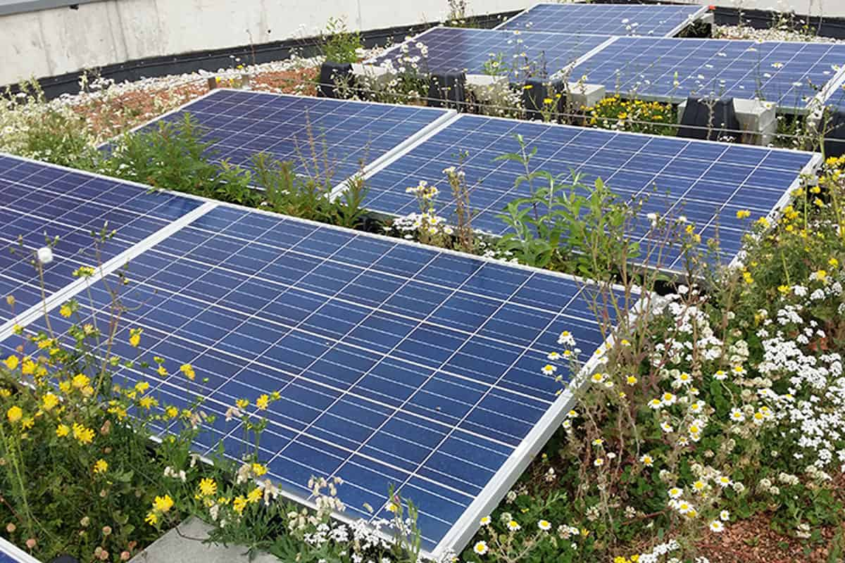 Overgrowth and Vegetation Removal Services for Solar Panels - Rethink Electric